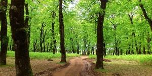 Foloi-Oak-Forest-3