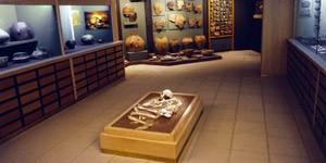 Neolithic-Civilization-Museum-of-Diros-1