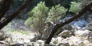 The-Katafiki-Canyon-of-Ermioni