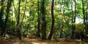 Vasiliki-Forest-3