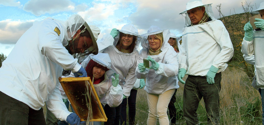 Beekeeper-for-a-day-in-Nafplio-1-of-Peloponnese-in-Greece