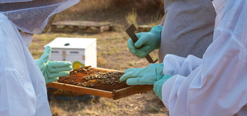 Beekeeper-for-a-day-in-Nafplio-4-of-Peloponnese-in-Greece