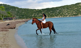 Beach Horse Riding at Kalamata