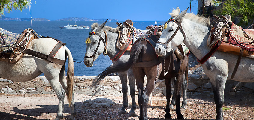 Donkeys-of-Hydra-Island-1